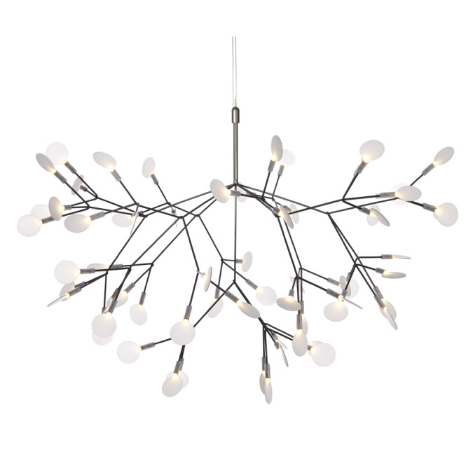 Heracleum Medium